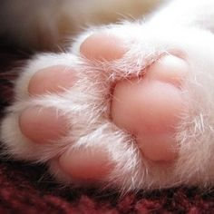 触りたく,にゃんこ,ぷにぷに,肉球,画像,貼っていく,猫019