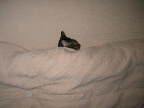 寝相,良すぎる,猫,画像,貼っていく019