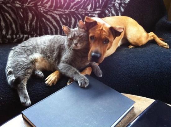 本当,仲良し,猫,犬,画像,貼っていく019