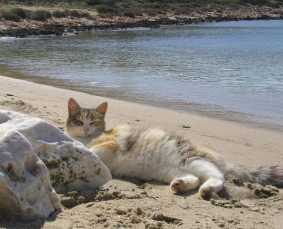 世界,可愛い,猫,画像,貼っていく020