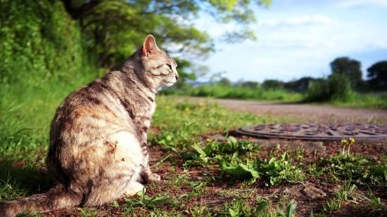 美しく,見とれ,猫,画像,貼っていく020