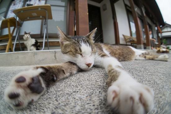 ぐでん,可愛い,のんびり,猫,画像,貼っていく020