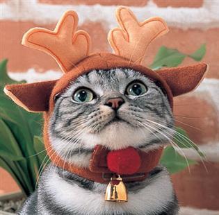 サンタコス,超絶,可愛い,猫ちゃん,画像,貼っていく021