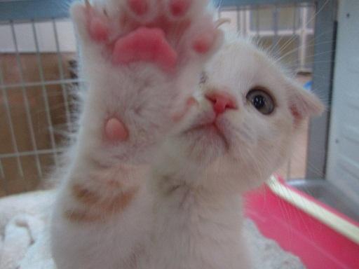 触りたく,にゃんこ,ぷにぷに,肉球,画像,貼っていく,猫021