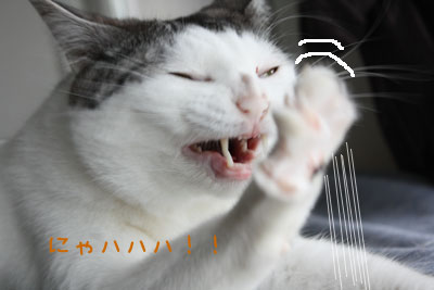 可愛すぎて,にやにや,猫,画像,貼っていく021