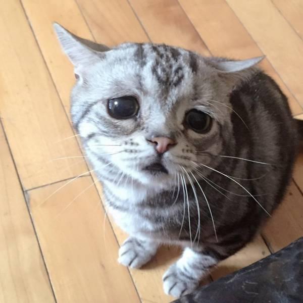 喜怒哀楽,可愛い,猫,画像,貼っていく021