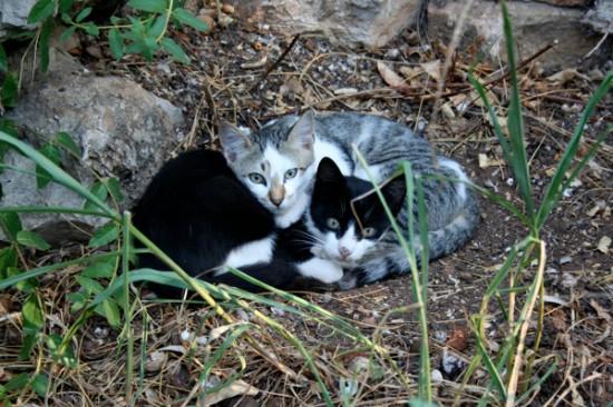 世界,可愛い,猫,画像,貼っていく022