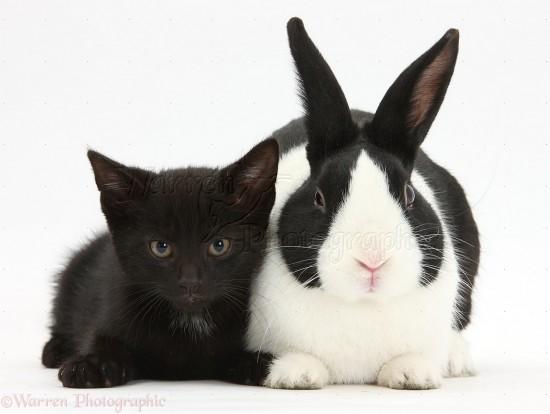 神秘的,美しい,黒猫,画像,貼っていく022