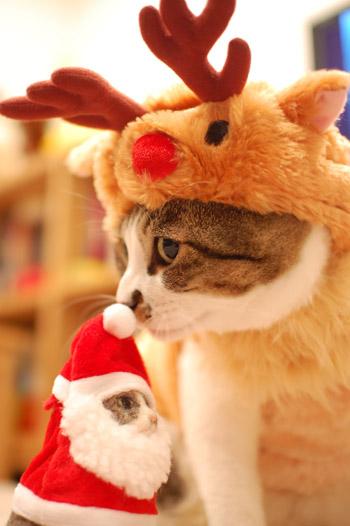 サンタコス,超絶,可愛い,猫ちゃん,画像,貼っていく022