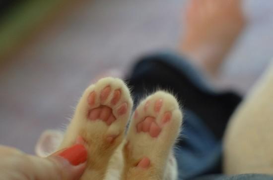 触りたく,にゃんこ,ぷにぷに,肉球,画像,貼っていく,猫022