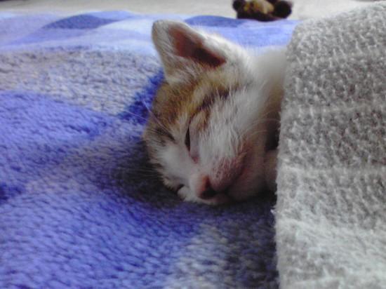 寝相,良すぎる,猫,画像,貼っていく022