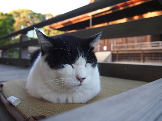 ぐでん,可愛い,のんびり,猫,画像,貼っていく022