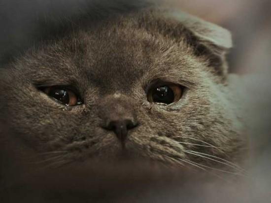 喜怒哀楽,可愛い,猫,画像,貼っていく022