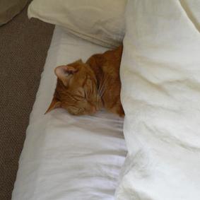 寝相,良すぎる,猫,画像,貼っていく023