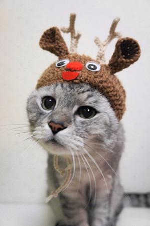 サンタコス,超絶,可愛い,猫ちゃん,画像,貼っていく023