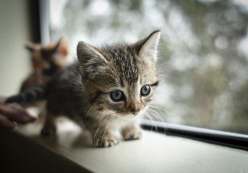 可愛すぎて,にやにや,猫,画像,貼っていく023
