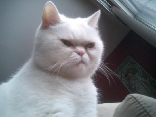 喜怒哀楽,可愛い,猫,画像,貼っていく023