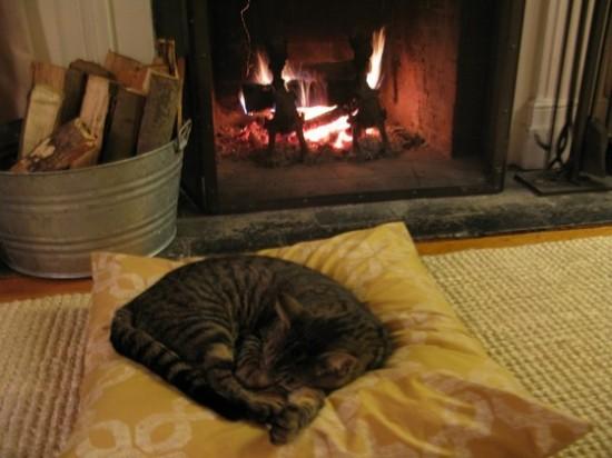 寒い,冬,ストーブ,猫,画像,貼っていく023