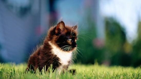 美しく,見とれ,猫,画像,貼っていく023