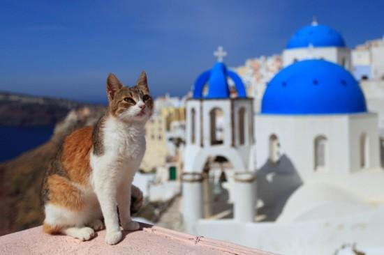 世界,可愛い,猫,画像,貼っていく024