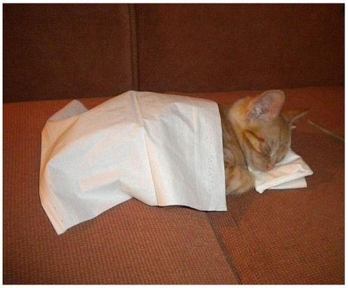寝相,良すぎる,猫,画像,貼っていく024