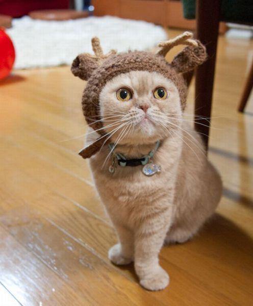 サンタコス,超絶,可愛い,猫ちゃん,画像,貼っていく024