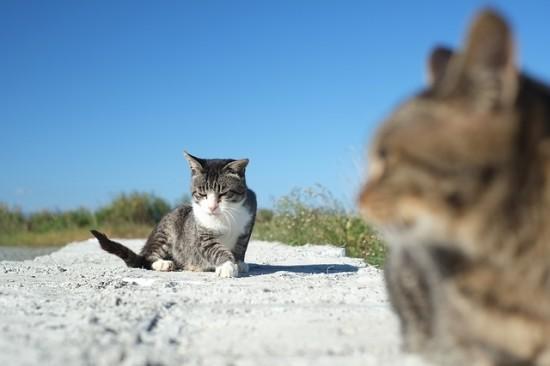 ぐでん,可愛い,のんびり,猫,画像,貼っていく024