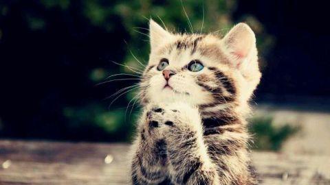 喜怒哀楽,可愛い,猫,画像,貼っていく024