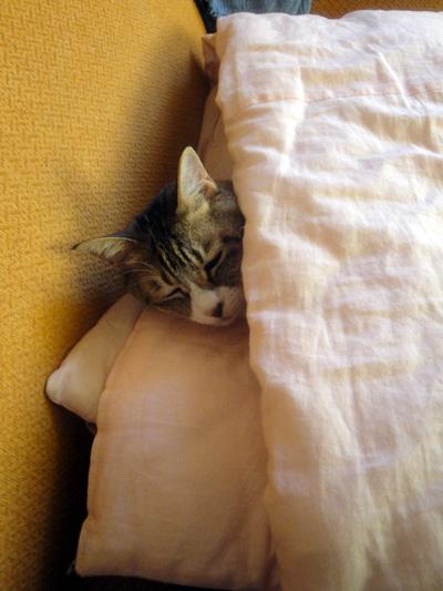 寝相,良すぎる,猫,画像,貼っていく025