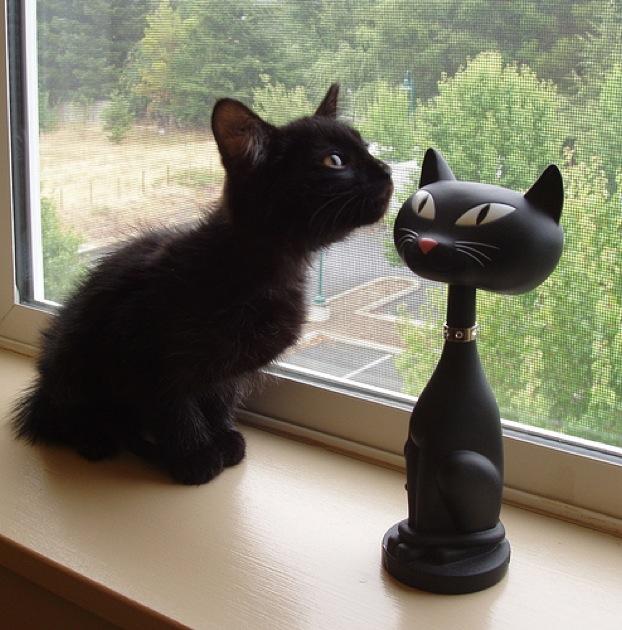 神秘的,美しい,黒猫,画像,貼っていく025