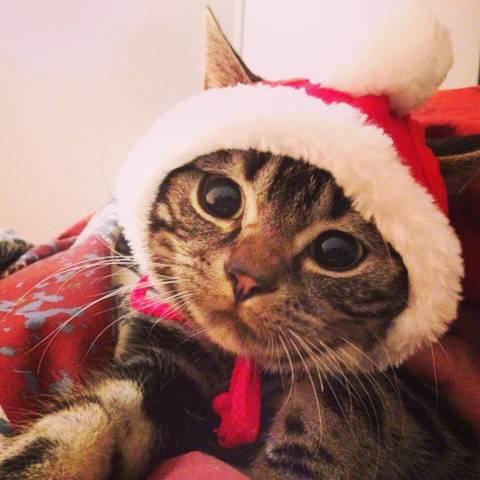 サンタコス,超絶,可愛い,猫ちゃん,画像,貼っていく025