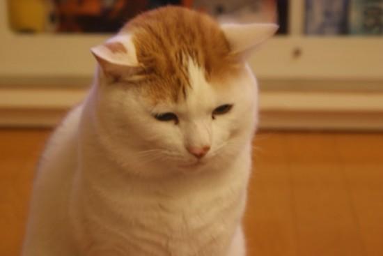 喜怒哀楽,可愛い,猫,画像,貼っていく025