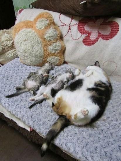 寝相,良すぎる,猫,画像,貼っていく026