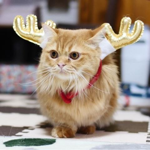 サンタコス,超絶,可愛い,猫ちゃん,画像,貼っていく026