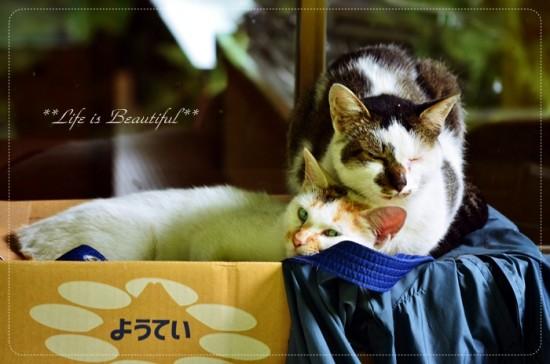 ぐでん,可愛い,のんびり,猫,画像,貼っていく026