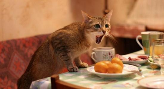 喜怒哀楽,可愛い,猫,画像,貼っていく026