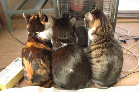 寒い,冬,ストーブ,猫,画像,貼っていく026