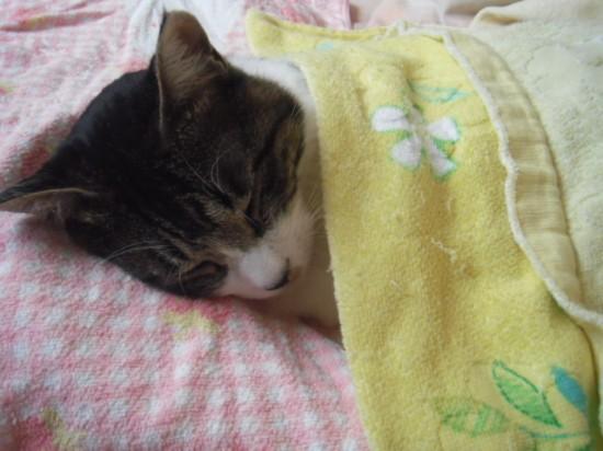 寝相,良すぎる,猫,画像,貼っていく027