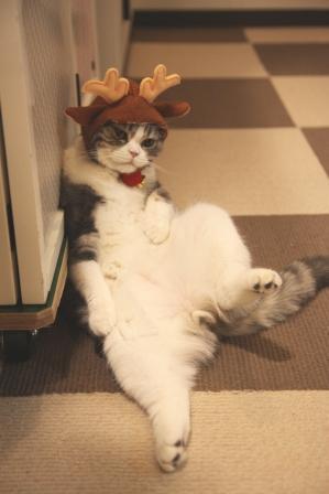 サンタコス,超絶,可愛い,猫ちゃん,画像,貼っていく027
