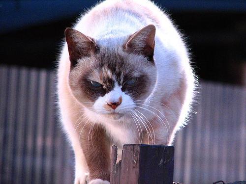喜怒哀楽,可愛い,猫,画像,貼っていく027