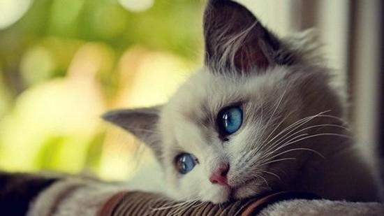 世界,可愛い,猫,画像,貼っていく028
