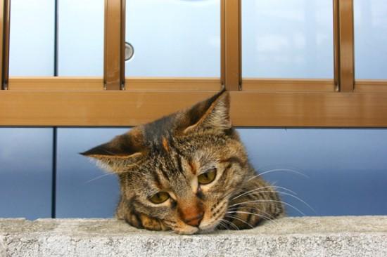 喜怒哀楽,可愛い,猫,画像,貼っていく028