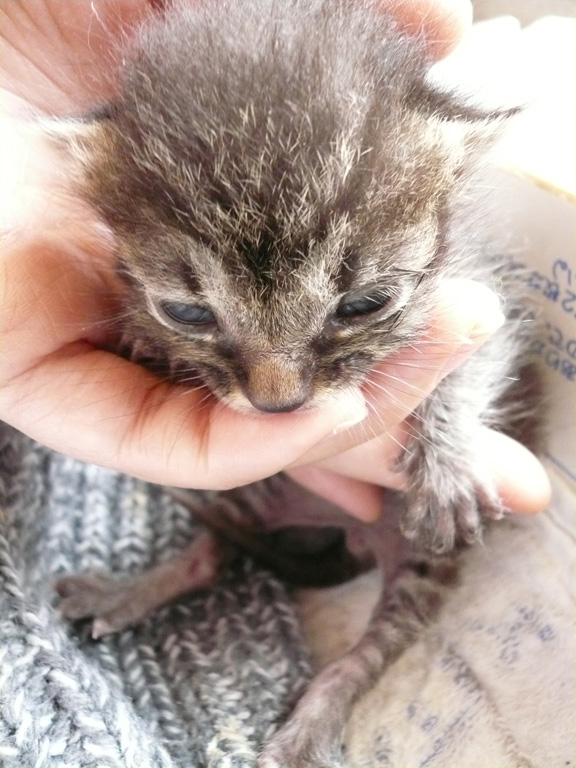 超絶,可愛い,猫,赤ちゃん,画像,貼っていく028
