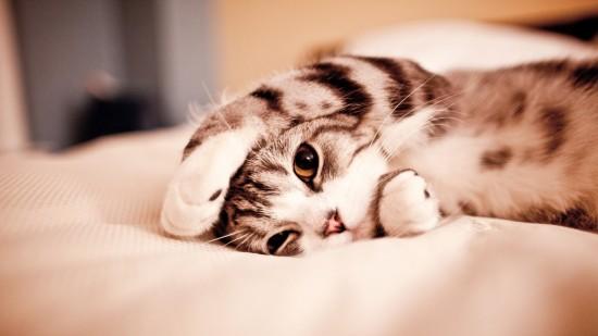 美しく,見とれ,猫,画像,貼っていく028