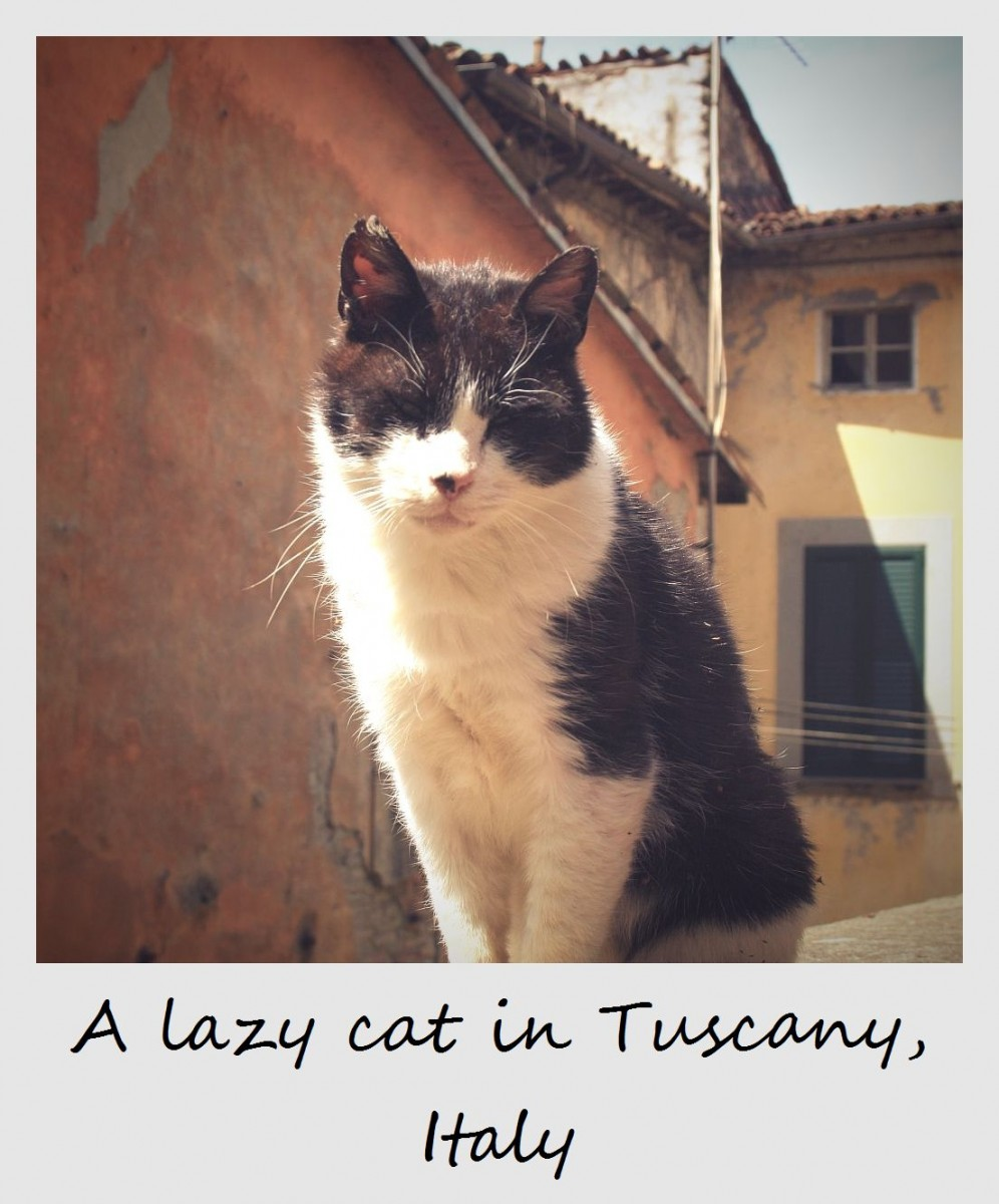 世界,可愛い,猫,画像,貼っていく029