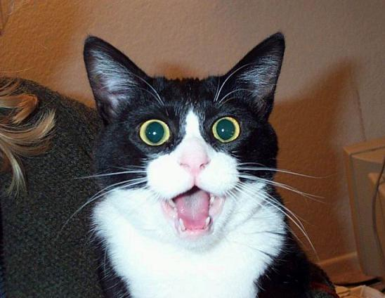 喜怒哀楽,可愛い,猫,画像,貼っていく029