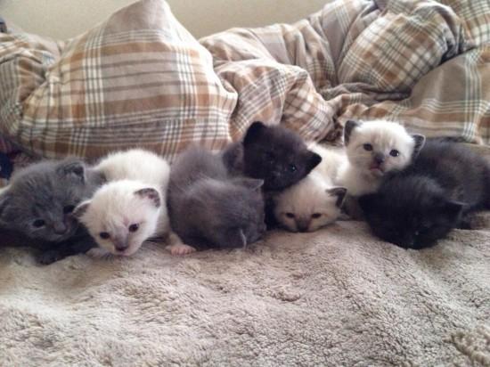超絶,可愛い,猫,赤ちゃん,画像,貼っていく029