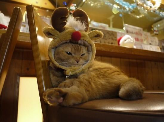 サンタコス,超絶,可愛い,猫ちゃん,画像,貼っていく029
