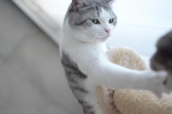 可愛すぎて,にやにや,猫,画像,貼っていく032