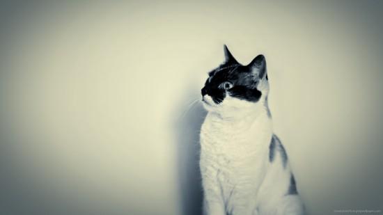 美しく,見とれ,猫,画像,貼っていく036